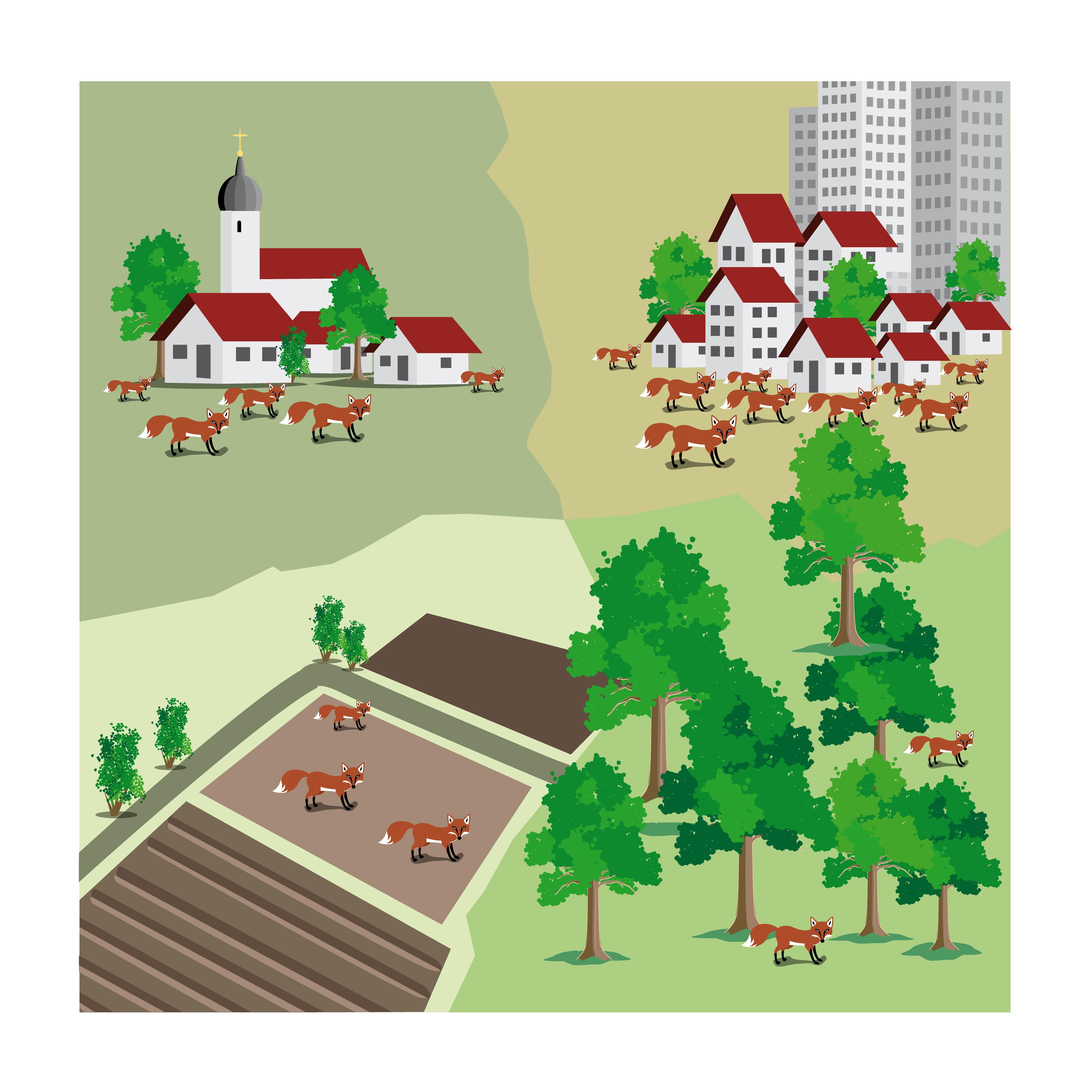 Je städtischer der Lebensraum, umso höher die Fuchsdichte
